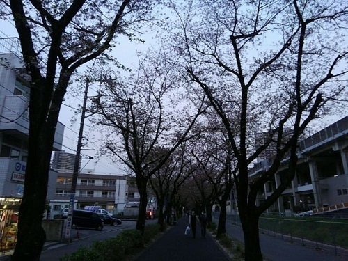 葉桜.jpg